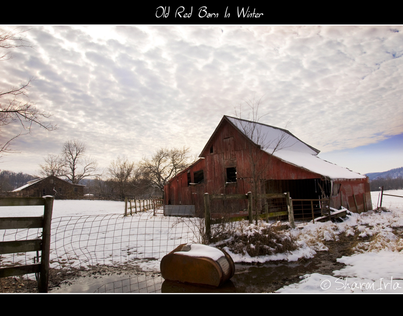 An Old Red Barn In Winter by Sharon Irla